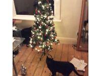 Xmas tree and Decs just £5