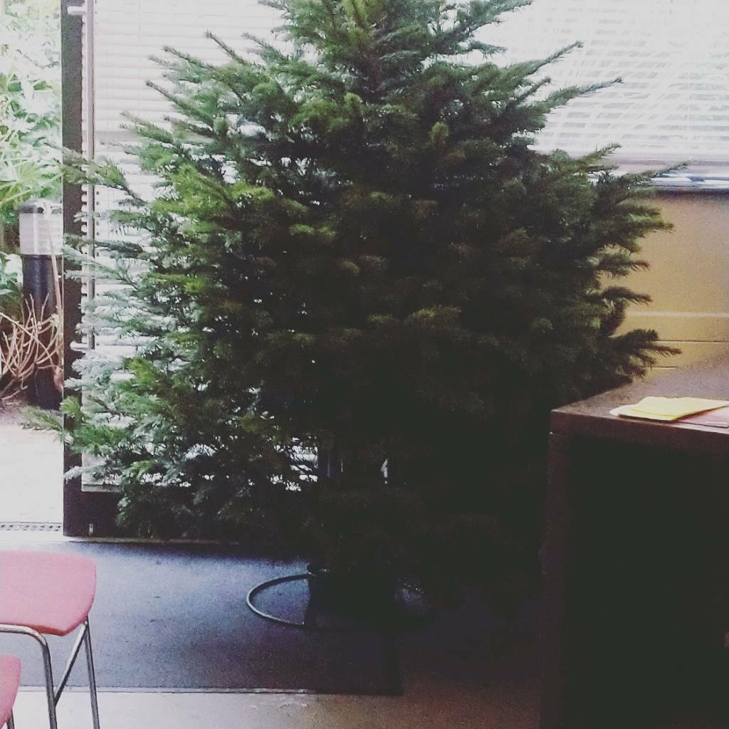 Real Christmas Trees Belfast area delivery available | in Belfast ...