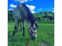14.2 dun pony for part loan