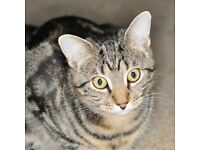 STILL MISSING YOUNG FEEMALE TABBY, HER BROTHER AND FAMILY WANT HER HOME