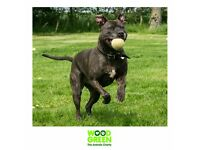 Sophie - Terrier (Staffordshire Bull) - 5 Years - Looking for her Forever Home