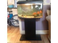 3 fish, 1 big Gold Fish & 2 big Fan Tails With and Stand.