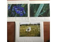 "3 authentic photographs. 10"" by 7""."