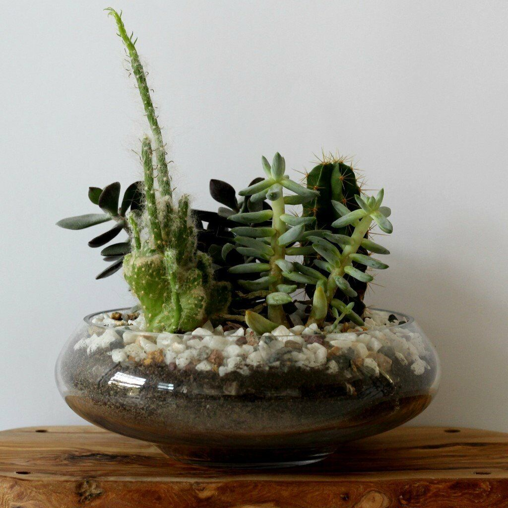 NEW Glass Bowl For Terrarium (cacti & Succulents