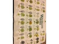 Woodland tree poster