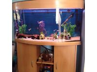 3 1/2ft bow front tank