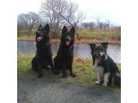 Dog Walker Kirkintilloch