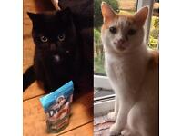 Temp foster home required for two lovely cats
