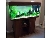 Aquarium - Juwel Rio 180