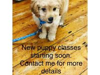 Puppy Training classes starting soon