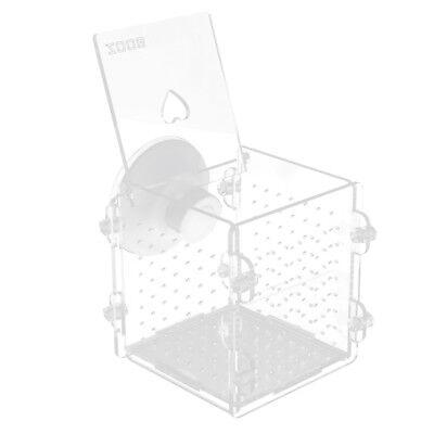 Acrylic Aquarium Fish Fry Breeding Box Hatchery Isolation Incubator Divider
