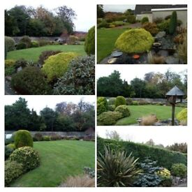 All grass cutting, Tree work , Hedges trimmed, Weed spraying, Power washing, All tidy ups,