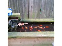 Garden Fish Pond Patio Complete Kit Oase Water Feature