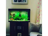 Juwel Rio 180 litre fish tank for sale.