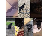 MISSING DOG - REWARD £100