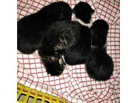 Kittens gorgeous 💖💖💖💖