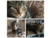 HENRY IS MISSING :( have you seen my cat?