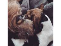 Dog-Friendly Property Wanted by 23/06
