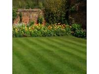 Great Garden - Fence Painter Grass cutting, hedges trimmed, weeding, general tidy up's