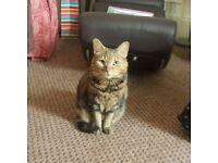Missing Tabby Cat - Bodie