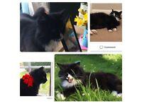 Missing cat tilly