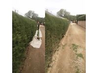 Gardening, Hedge Cutting, Hedging