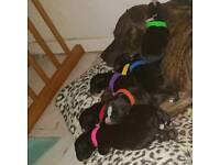 Cute cross puppies