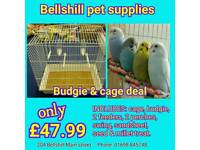 Budgies for sale (cage deal also)