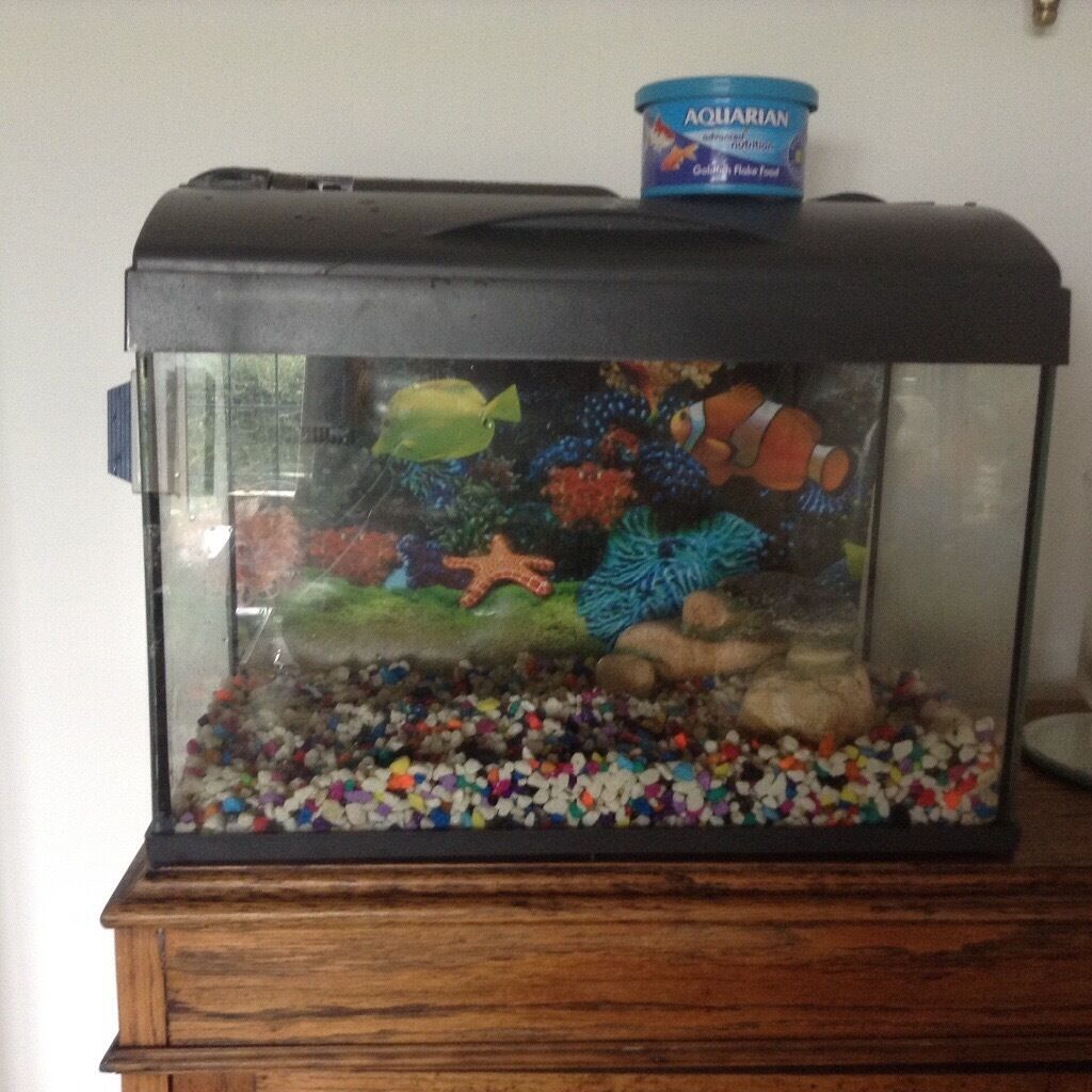 Fish Tank Food Ads Buy  Sell Used - Find Right Price Here-7901