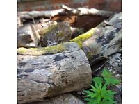 Free wood for burner -felled trees