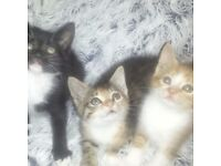 GORGEOUS KITTENS FOR SALE (DIFFERENT PRICES)