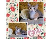 2 girl, 2 boy kittens