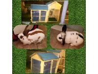 Rabbits with hutch and accessories
