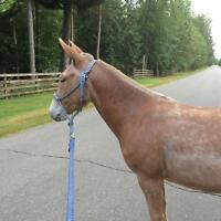Cute little 13hh palomino mule $2000