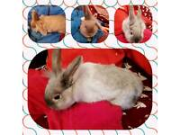 Bunnys both boys can go together or separate £25.00 each