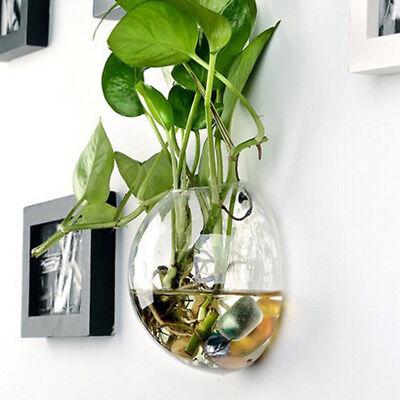 Ball 12cm Hydroponic Wall Hanging Planter Home Decor Nursery Pot Glass Vase