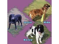 Pawfect Pet Carers - Dog Walking, Dog Home Boarding & Pet Sitting, Ipswich and all surrounding areas