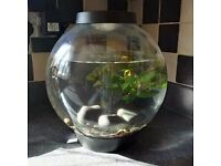 Baby BiOrb fish tank with 2 small fish and accessories