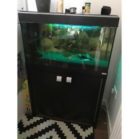Fish tank gone