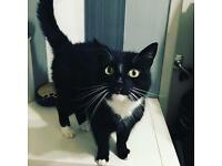 Bella gorgeous cat for rehoming