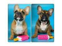 French bulldogs puppies 2 BOYS LEFT!!!