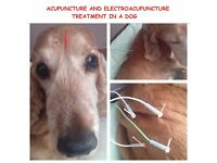 Veterinary Holistic Medicine and Acupuncture for pets