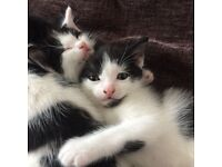 I have to male kittens