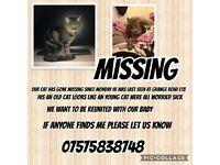 Missing cat plaistow e13
