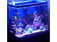 Marine Aquarium with Sump and Equipment