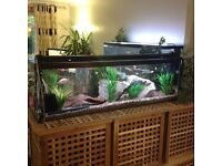 4ft fish tank with lid and light £65 ph or text 07768476166
