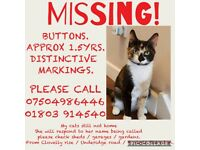 Missing cat over a week called buttons