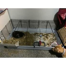 Female rabbit with cage