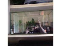 Zen black tropical fish tank.