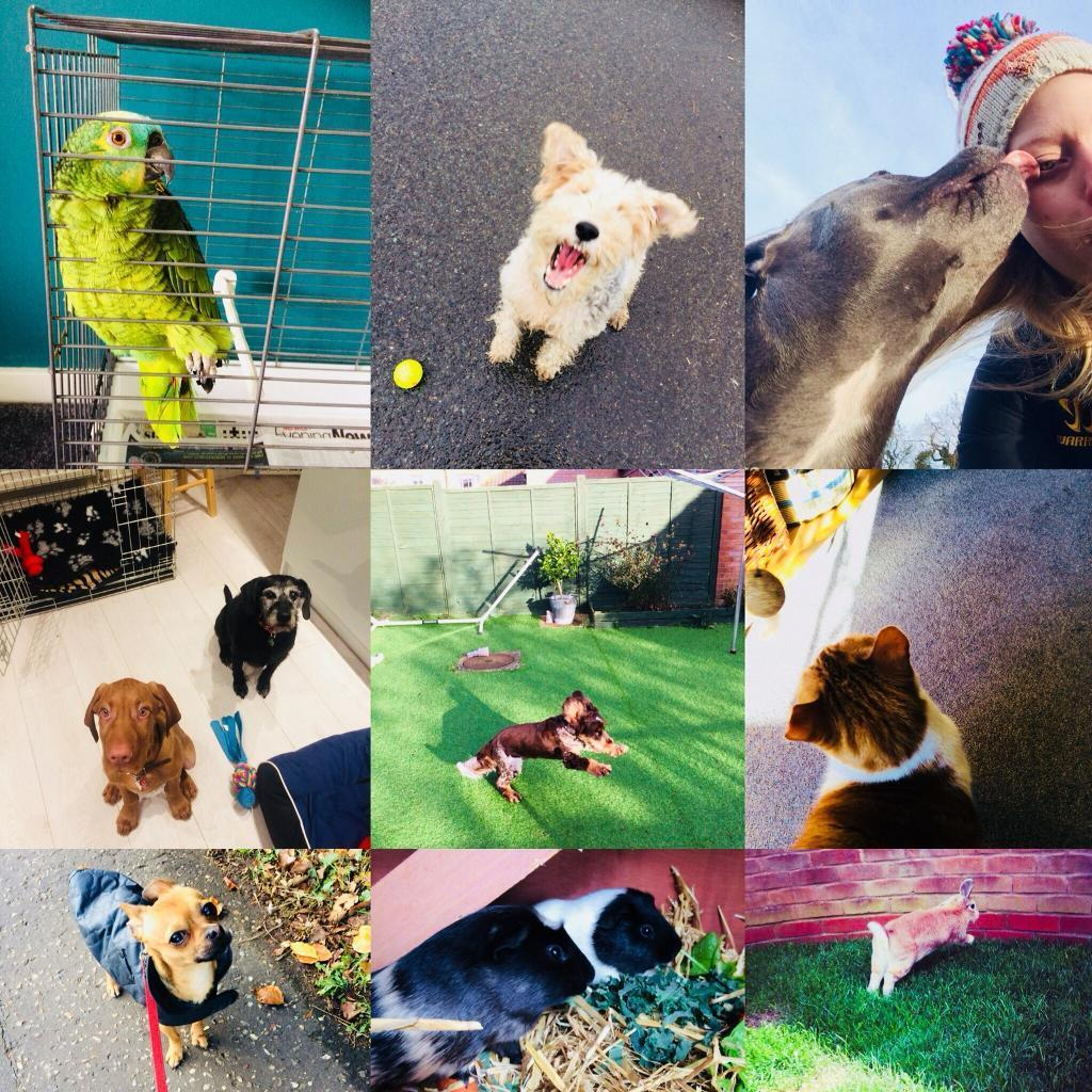Pet sitting/ sitter dog walking / walker, pop ins